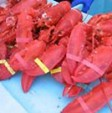 pile of fresh cooked maine lobsters