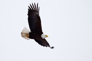 best birding in Maine