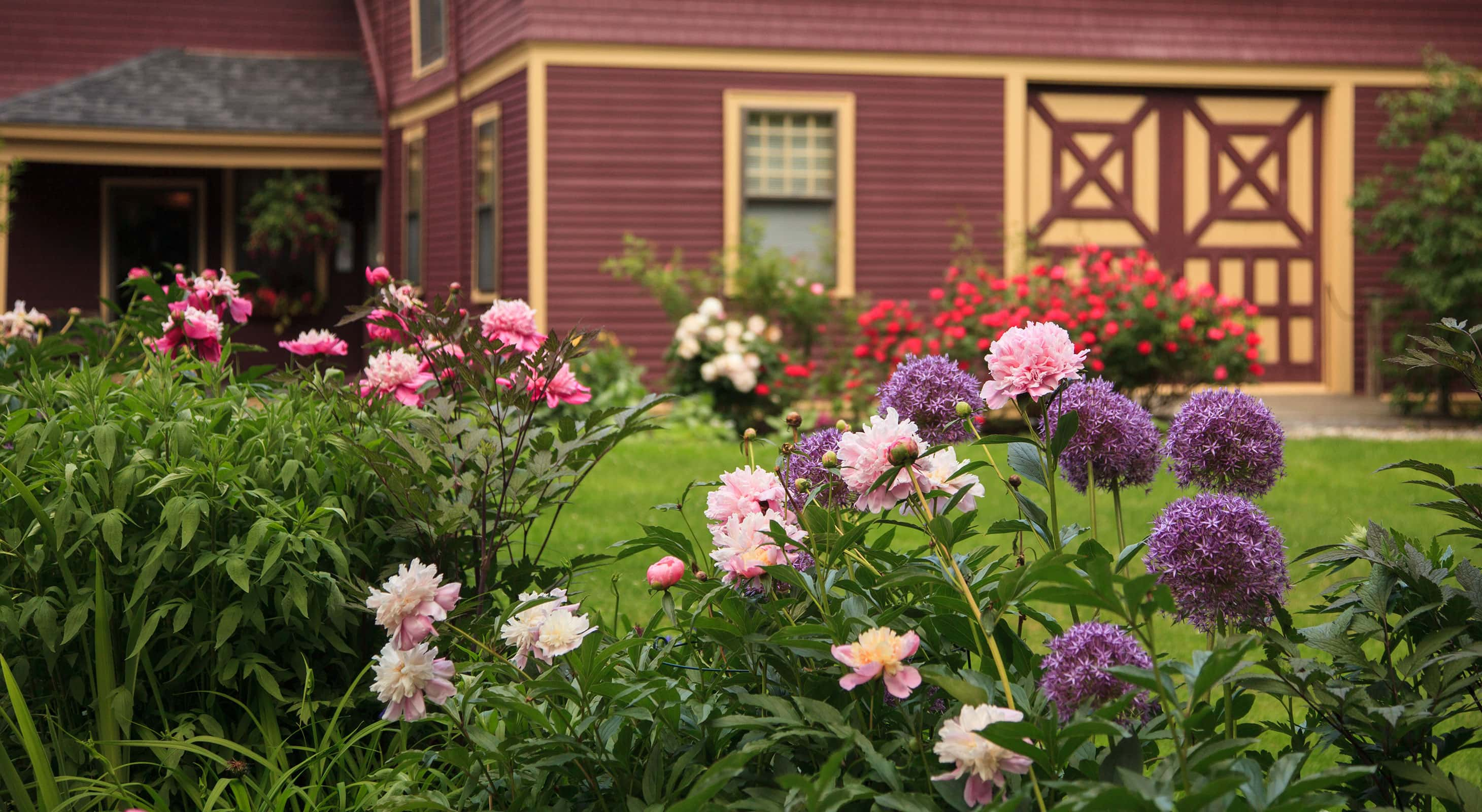 Flower bushes outside of the Berry Manor Inn