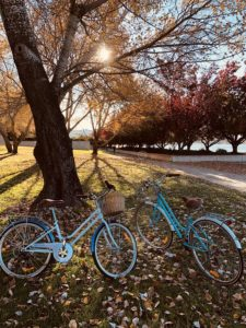 Two aqua bicycles on the grass in a forest of colorful trees