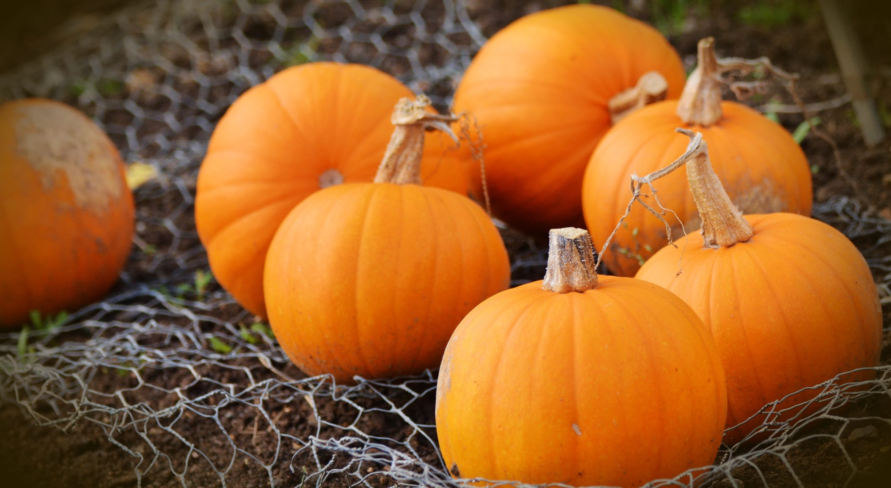 Bright orange pumpkins on a bed of wire mesh